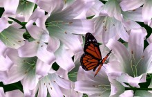 Butterfly and lilies wallpaper - Lilies