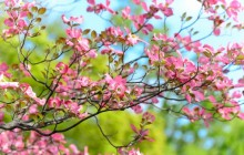 Magnolia tree images