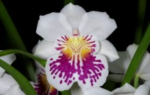 Orchid photo - Orchids
