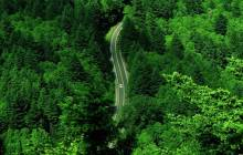 Forest road wallpaper - Roads