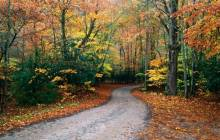 Autumn road wallpaper - Roads