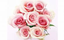 Pink roses wallpaper - Rose wallpaper