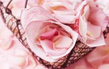 Beautiful rose wallpaper - Roses