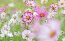 Pink and white flower wallpaper - Other