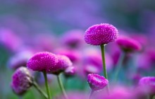 Pink flower wallpaper