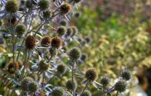 Web thistles wallpaper - Other