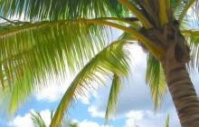 Palm tree images - Palm tree wallpaper