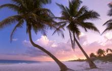 Sunset palm tree pictures - Palm tree wallpaper
