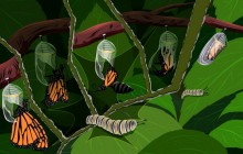 Caterpillars turn into butterflies - Butterfly