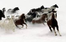 Running horse wallpaper - Horse
