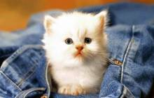 White kitten wallpaper - Cats & kittens