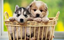 Cute puppy pictures - Dogs
