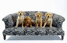 Dogs wallpaper - Dogs