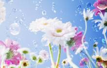 Spring flowers wallpaper - Spring